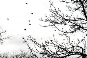 birds_flying_02 (1)